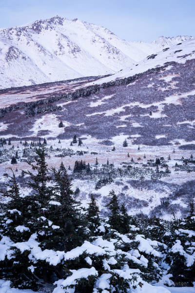 Photograph - Chugach In Alpenglow by Tim Newton