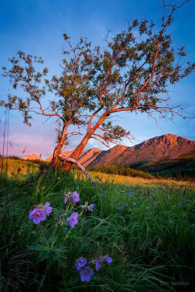 Photograph - Chugach Mountain Sunset by Tim Newton