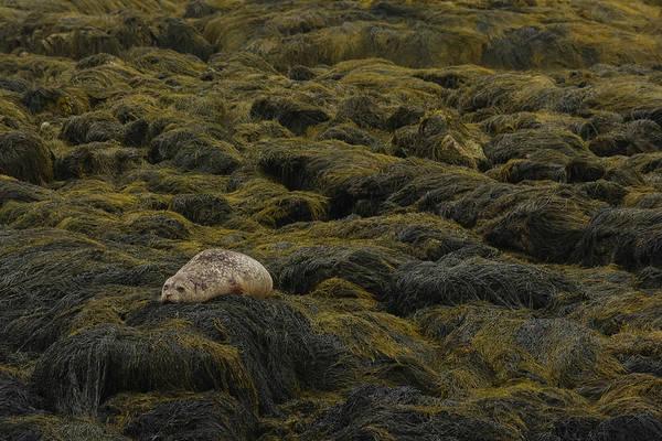 Photograph - Chum On The Rocks by Jesse MacDonald