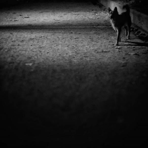 Dogs Wall Art - Photograph - Chuvak #dogsofinstagram #dogs #pets by Rafa Rivas