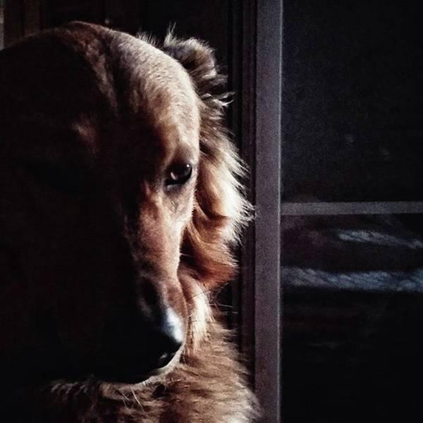 Chuvak #portrait #dogsofinstagram #dog Art Print