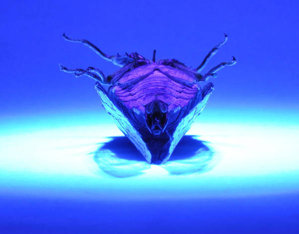 Photograph - Cicada In Uv by Mark Fuller