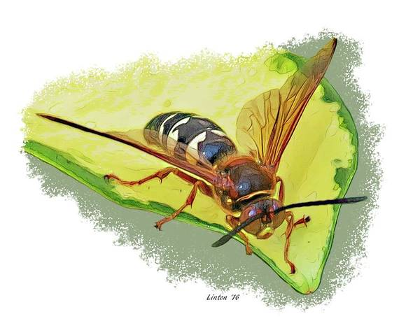 Digital Art - Cicada-killer Wasp by Larry Linton