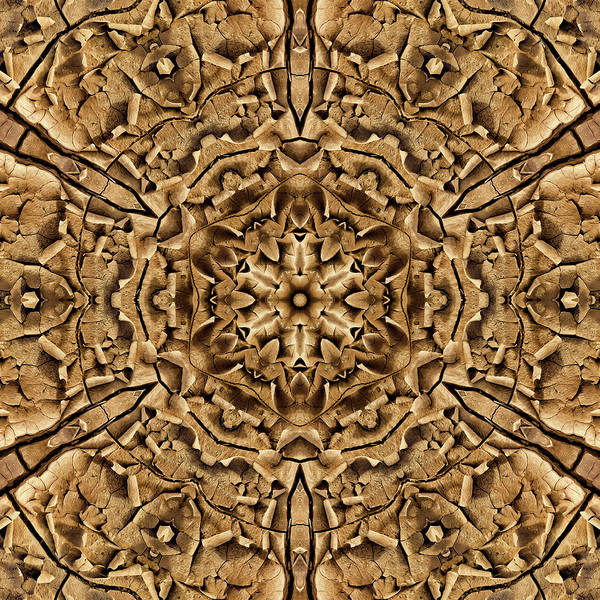 Digital Art - Cinnamon Delight Chrysanthemud by Becky Titus