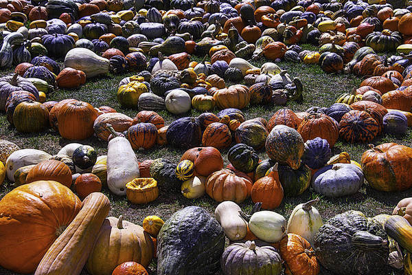 Wall Art - Photograph - Circle Of Gourds by Garry Gay
