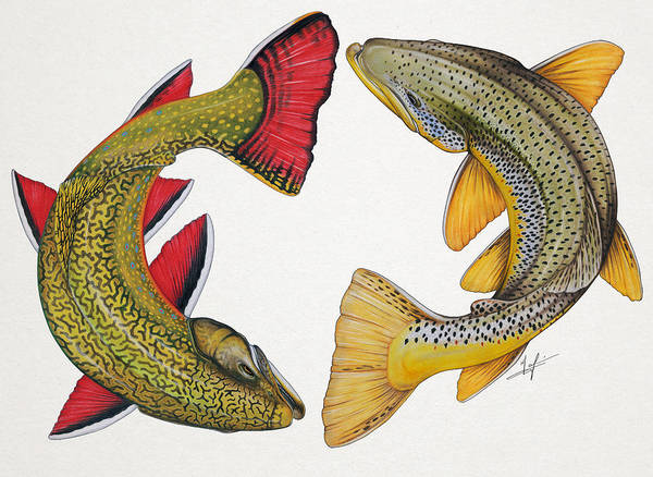 Trout Watercolor Wall Art - Painting - Circling Brook And Brown Trout by Nick Laferriere