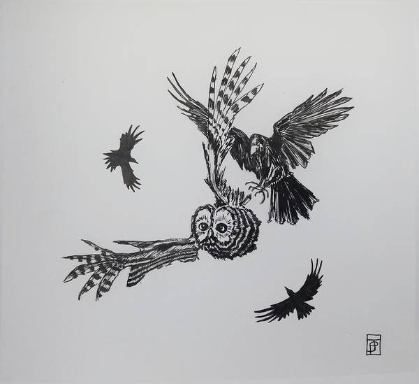 Raven Drawing - Circling by John Parish
