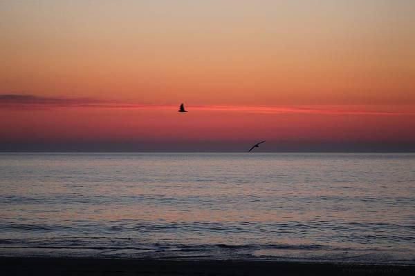 Photograph - Circling Seagulls At Sunrise by Robert Banach
