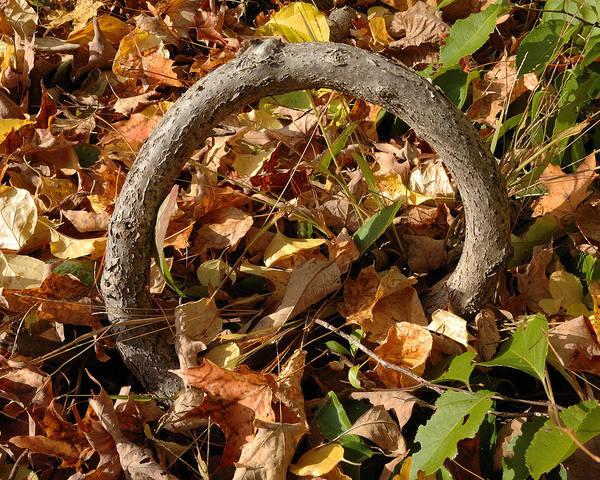 Photograph - Circular Branch by Frank Mari