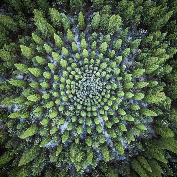 Photograph - Circular Symmetry by Alpha Wanderlust