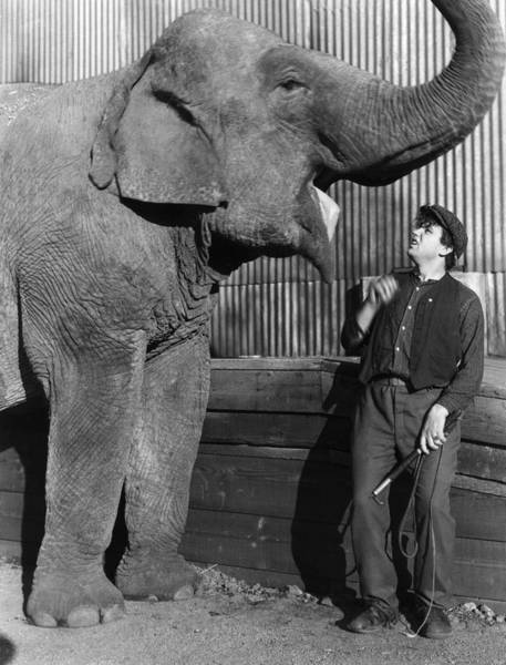 Carnies Photograph - Circus: Elephant by Granger
