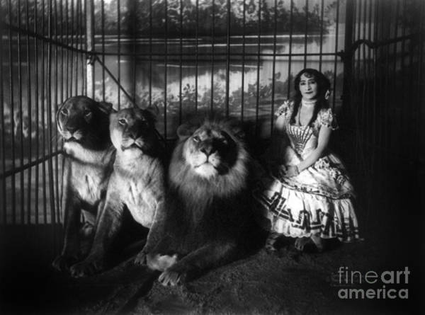 Photograph - Circus, Lion Tamer, C1899.  by Granger