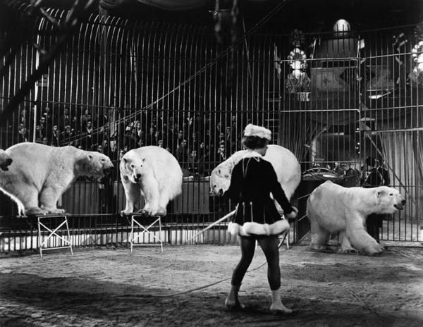 Carnies Photograph - Circus: Polar Bears by Granger