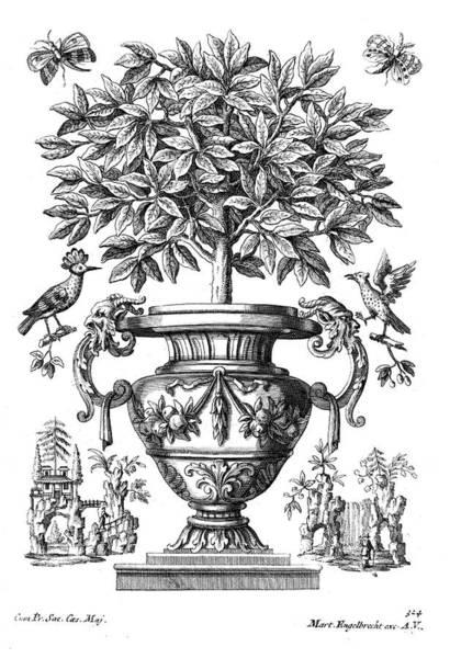 Botanical Garden Drawing - Citrus Trees by Martin Engelbrecht