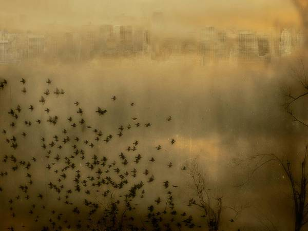 Bird In Flight Digital Art - City Blur by Gothicrow Images