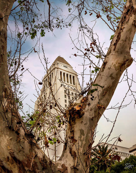 Photograph - City Hall Seen Through A Tree by Endre Balogh