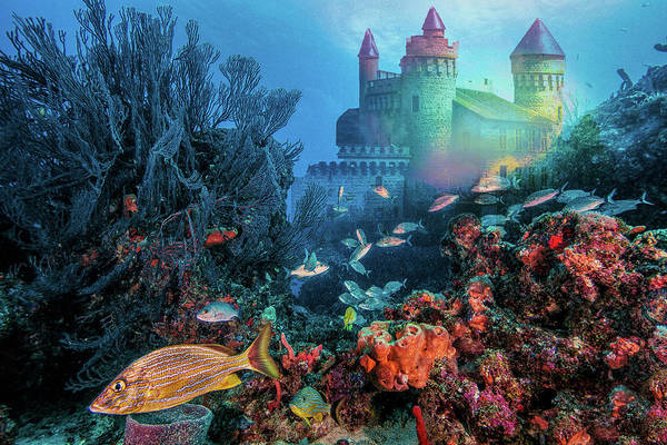 Photograph - City On The Rainbow Reef by Debra and Dave Vanderlaan