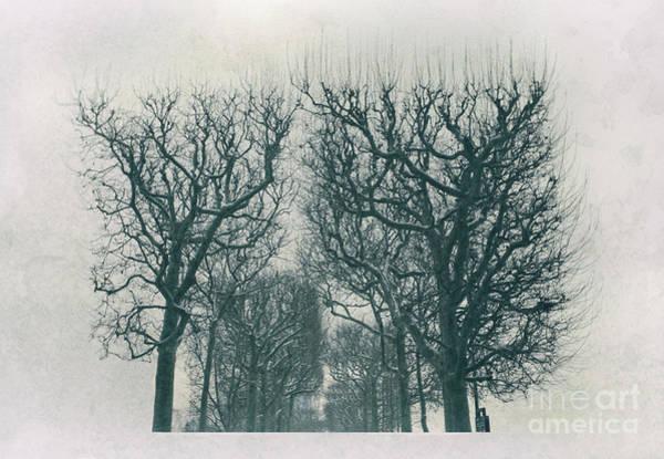 Photograph - City Park,  Winter by Ariadna De Raadt