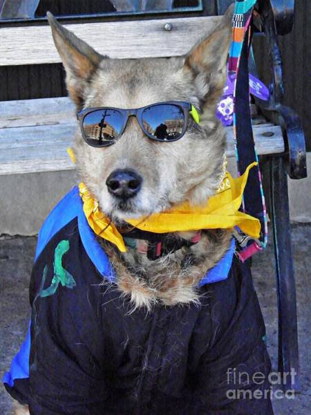 German Shepherd Photograph - Citydog by Sarah Loft