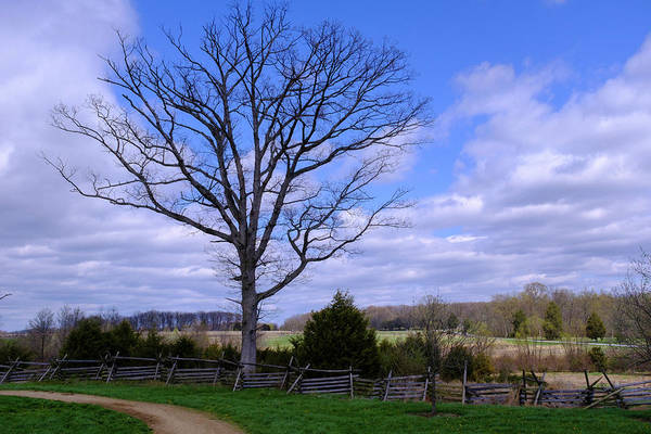 Civil War Fence And Tree With No Leaves Next In Gettysburg Penns Art Print