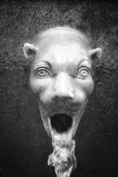 Wall Art - Photograph - Civit Head Detail by Teresa Mucha