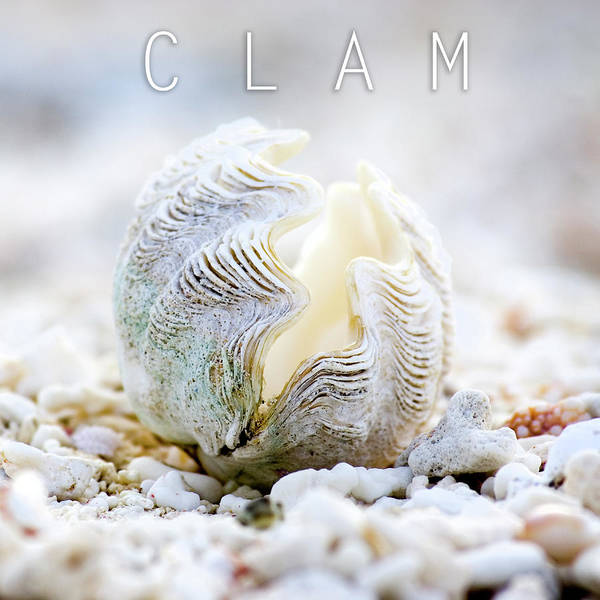 Out Of The Ordinary Photograph - Clam. by Sean Davey