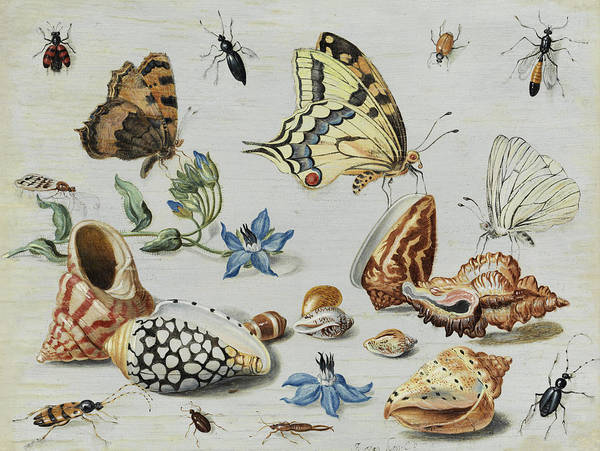 Wall Art - Painting -  Clams, Butterflies, Flowers And Insects by Jan van Kessel