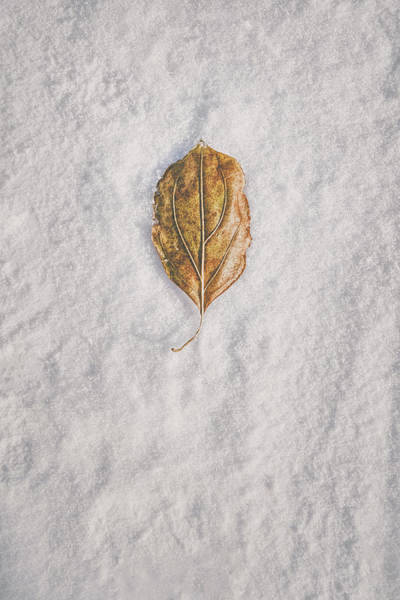 Photograph - Clash Of Seasons by Scott Norris