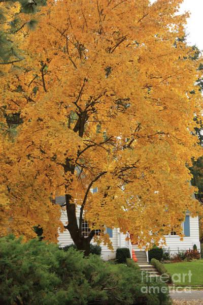 Wall Art - Photograph - Classic Autumn Scene by Carol Groenen