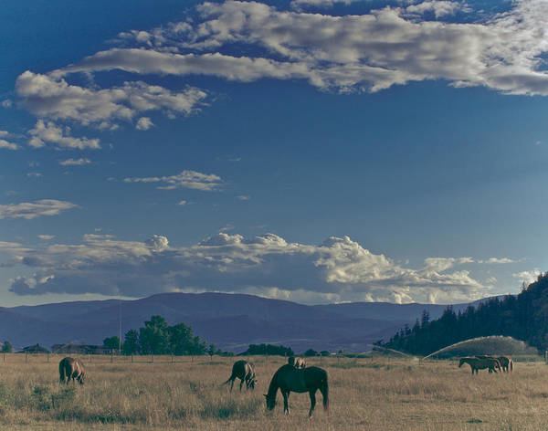 Photograph - Classic Country Scene by Trance Blackman