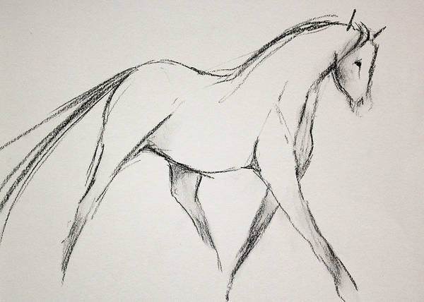 Warmbloods Drawing - Classic Lines by Jennifer Fosgate