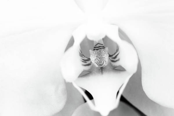 Photograph - Classic Orchid by Stewart Helberg
