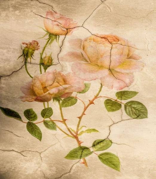 Painting - Classic Vintage Shabby Chic Pale Pink Roses by Joy of Life Art