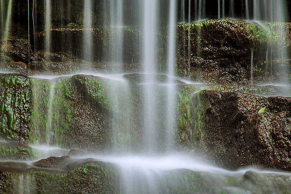 Moss Green Photograph - Cleanse Me by Az Jackson