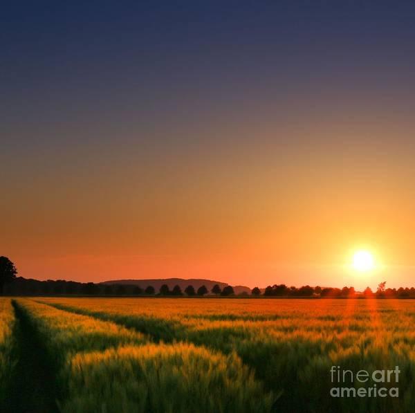 Cornfield Photograph - Clear Sunset by Franziskus Pfleghart