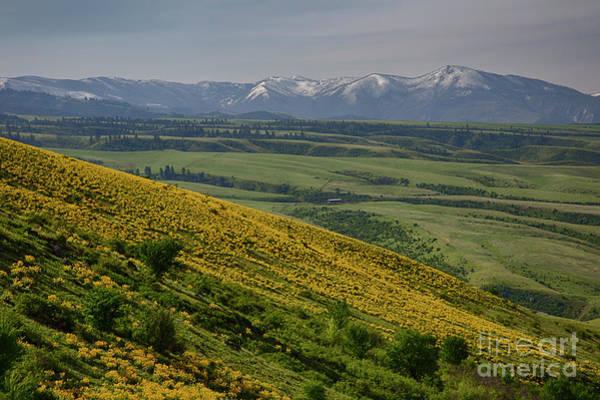 Balsamorhiza Sagittata Photograph - Clearwater Mountains by Idaho Scenic Images Linda Lantzy