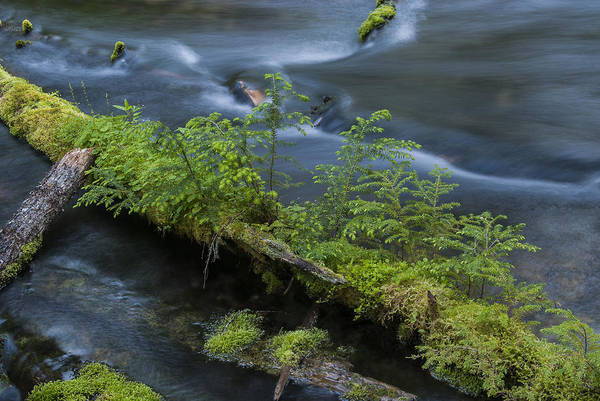 Photograph - Clearwater River by Robert Potts