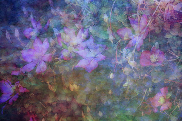 Photograph - Clematis Impression Through The Mist 6709 Idp_2 by Steven Ward