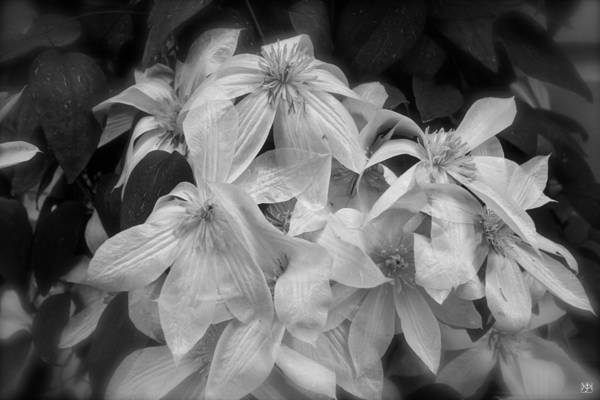 Photograph - Clematis In The Rain by John Meader