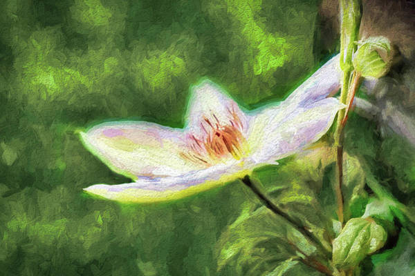 Wall Art - Photograph - Clematis Study by Ches Black