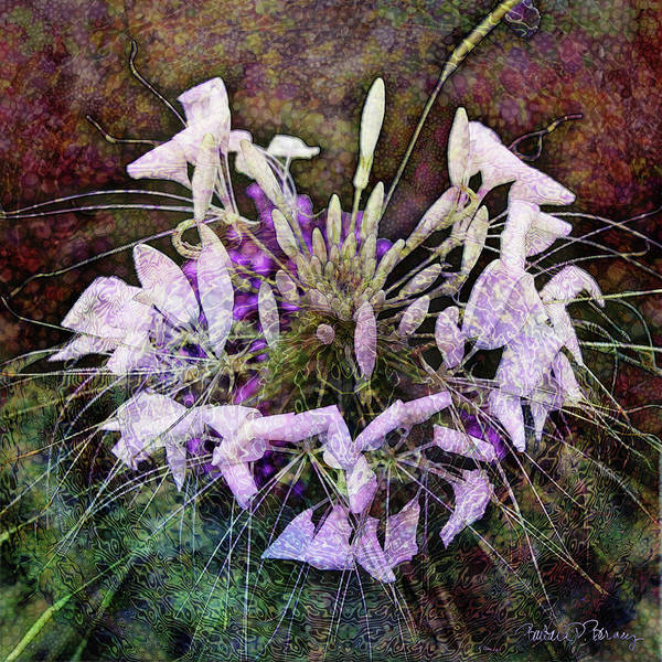 Digital Art - Cleome by Barbara Berney