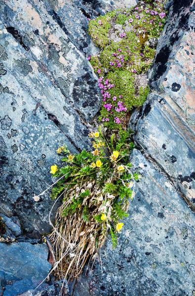 Photograph - Cliff Crevice Garden by Tim Newton
