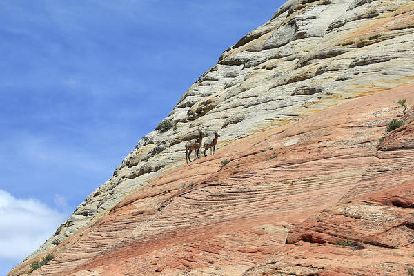 Wall Art - Photograph - Cliff Dwellers by Donna Kennedy