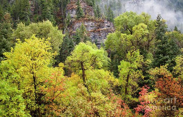 Photograph - Cliffside Fog by David Millenheft