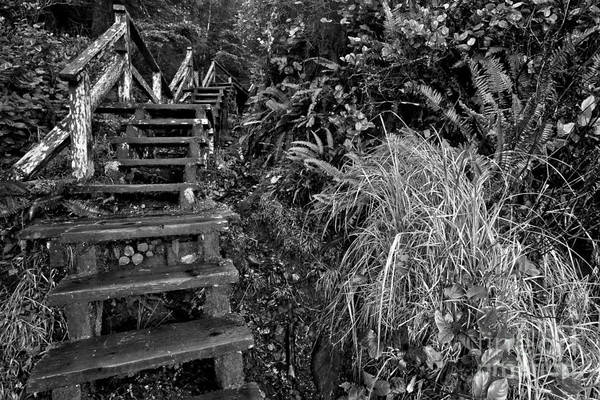 Photograph - Climbing Through The Rainforest - Black And White by Adam Jewell