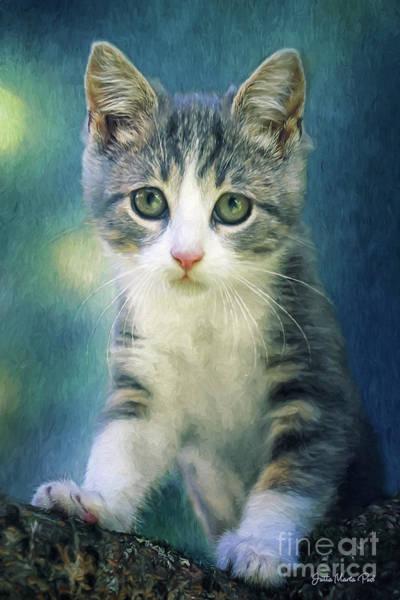 Photograph - Climbing Kitten by Jutta Maria Pusl