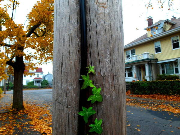 Photograph - Climbing Vine by Christopher Brown
