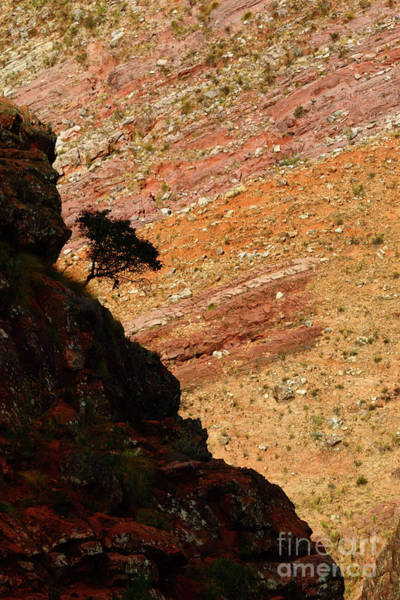 Photograph - Clinging On In A Colourful Canyon by James Brunker