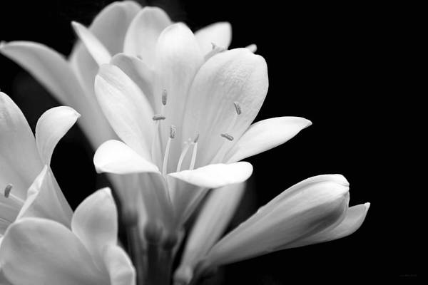 Jennie Photograph - Clivia Flowers Black And White by Jennie Marie Schell