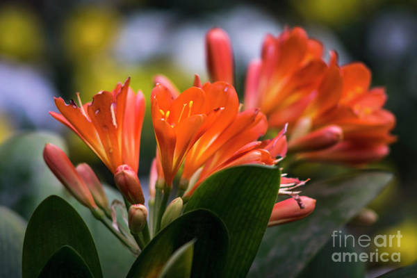 Photograph - Clivia Genoves Park Cadiz Spain by Pablo Avanzini